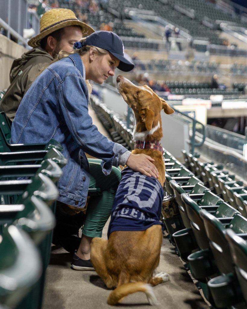 A woman pets a dog wearing a Detroit Tigers jersey at a Bark at the Park baseball game