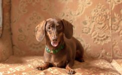 International Pet Photographer – portrait session in Italy