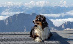 Worldwide Dog Photographer – Germany travel pet portraits