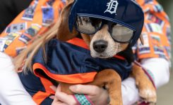 Bark at the Park – Comerica