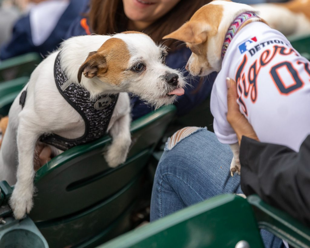 Two small dogs greeting each other over the stadium seats at Bark at the Park