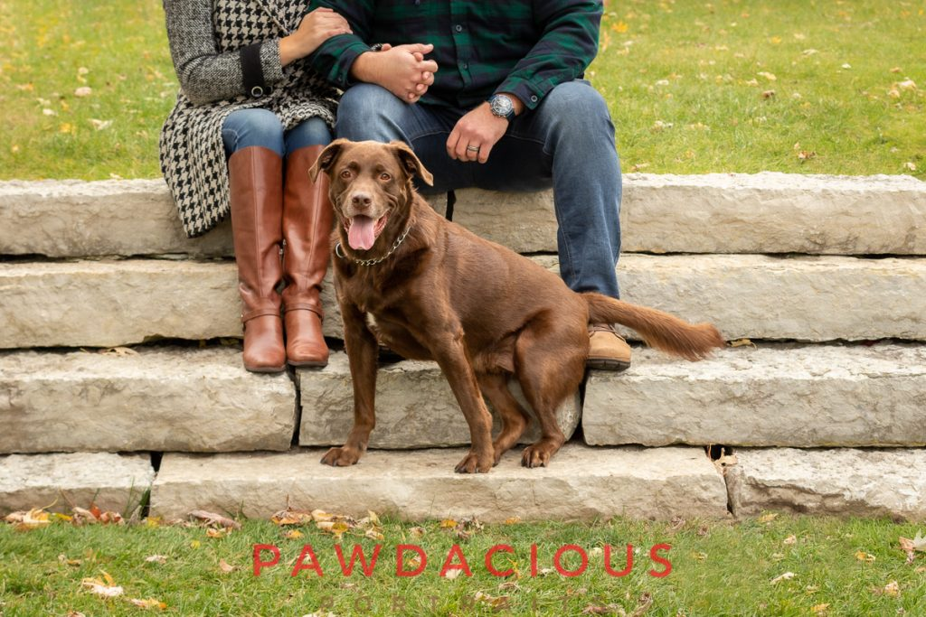A chocolate lab sitting on stone steps in front it's owners in Georges Georges Park, Michigan