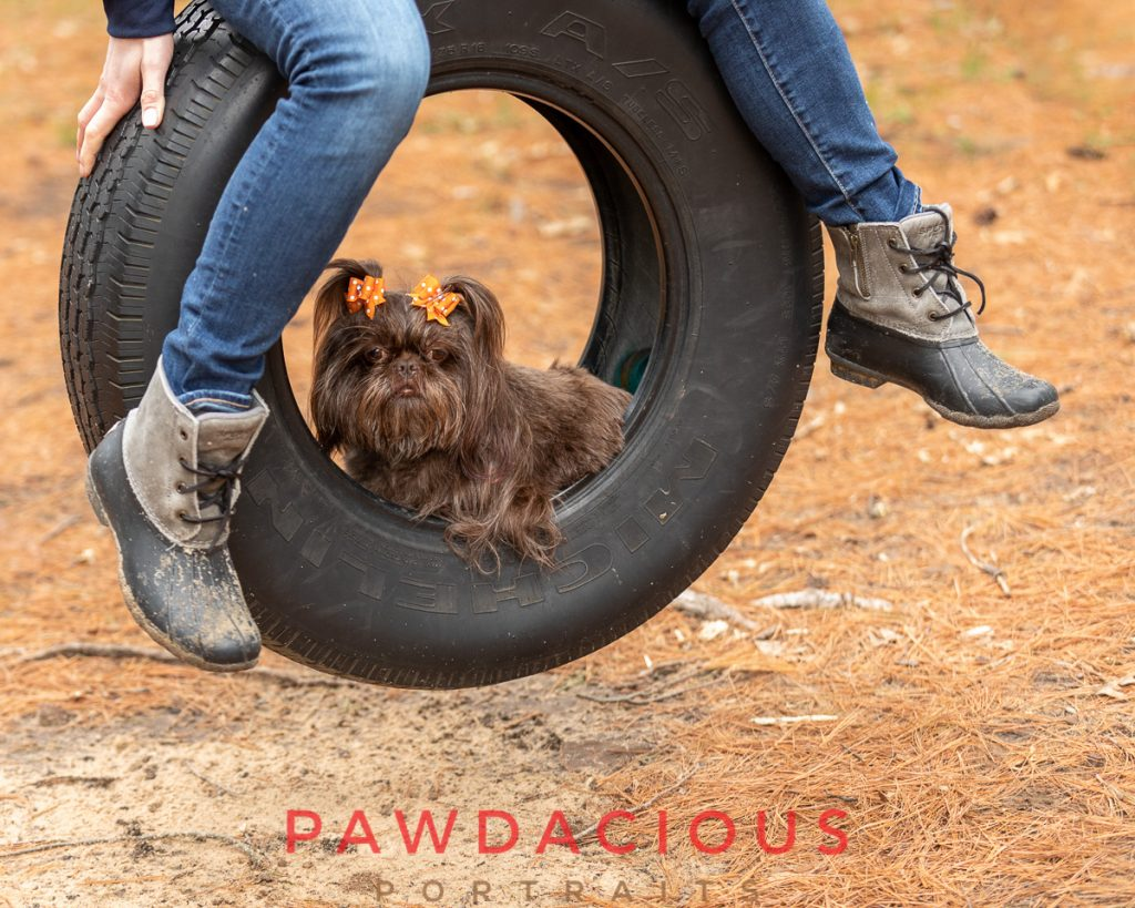 A small dog sitting inside a tire swing that her owner is sitting on