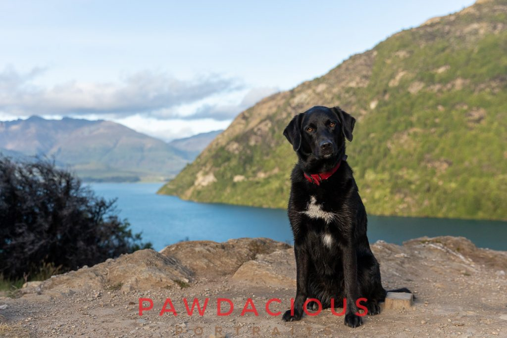 A black dog sitting on a rocky overlook of Bob's Cove, New Zealand