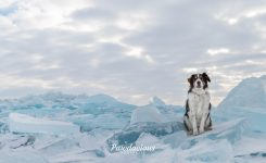 Blue Ice dog photoshoot